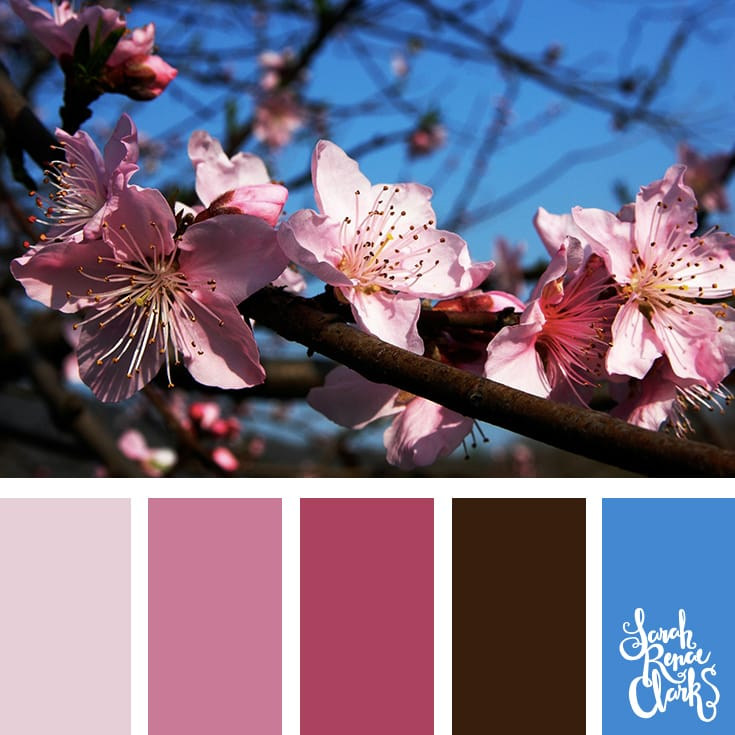 Pretty pink color Inspiration | Click for more color combinations and color palettes inspired by the Pantone Fall 2017 Color Trends, plus other coloring inspiration at http://sarahrenaeclark.com | Colour palettes, colour schemes, color therapy, mood board, color hue