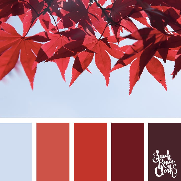 Amazing red leaves for color inspiration | Click for more fall color combinations, mood boards and seasonal color palettes at http://sarahrenaeclark.com