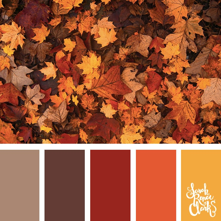 Autumn leaves color scheme | Click for more fall color combinations, mood boards and seasonal color palettes at http://sarahrenaeclark.com
