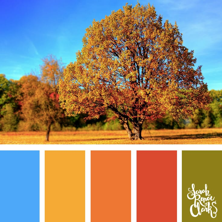 Autumn scenery color inspiration | Click for more fall color combinations, mood boards and seasonal color palettes at http://sarahrenaeclark.com