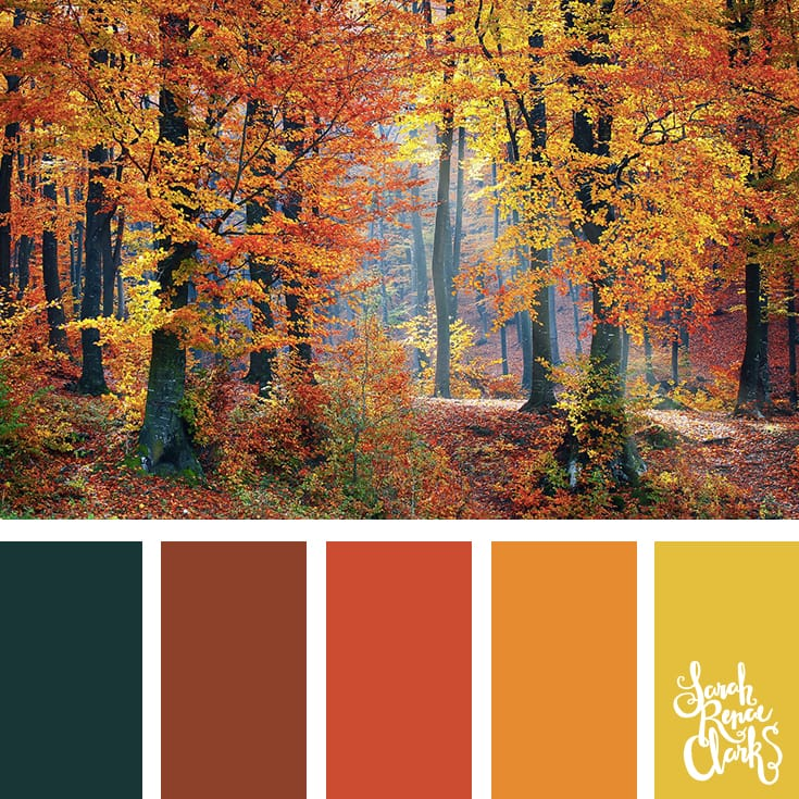 Into the woods - Fall color scheme | Click for more fall color combinations, mood boards and seasonal color palettes at http://sarahrenaeclark.com
