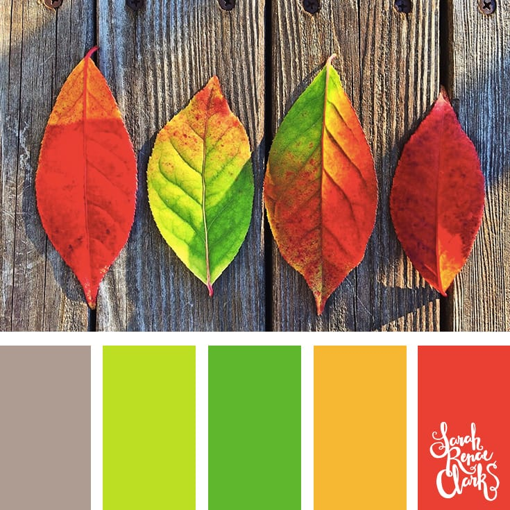 Color inspiration from pretty Autumn leaves | Click for more fall color combinations, mood boards and seasonal color palettes at http://sarahrenaeclark.com