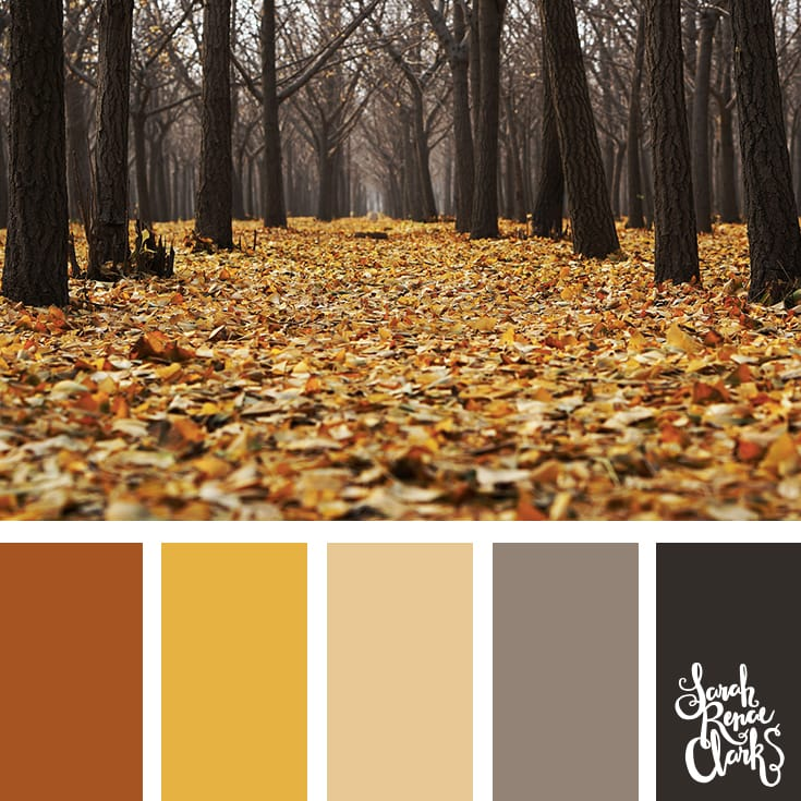 I love Autumn colors! | Click for more fall color combinations, mood boards and seasonal color palettes at http://sarahrenaeclark.com