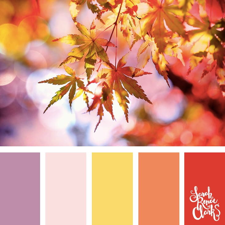 Sweet Autumn colors | Click for more fall color combinations, mood boards and seasonal color palettes at http://sarahrenaeclark.com