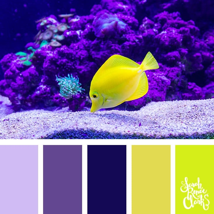 High contrast yellow and purple color palette | 25 color palettes inspired by the PANTONE color trend predictions for Spring 2018 - Use these color schemes as inspiration for your next colorful project! Check out more color schemes at www.sarahrenaeclark.com #color #colorpalette