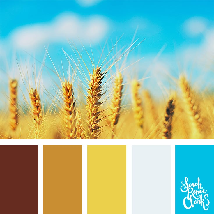 Field color palette