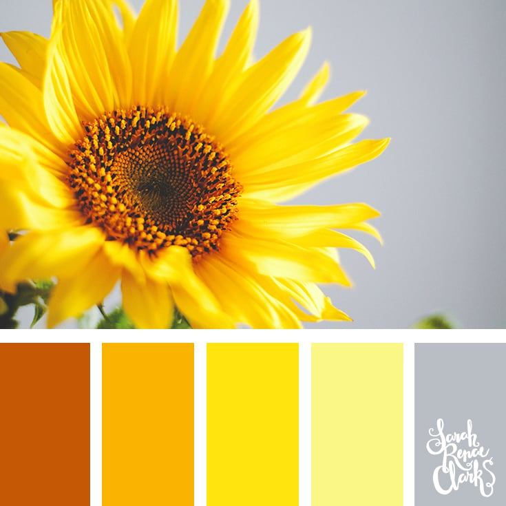 Sunflower yellow color scheme