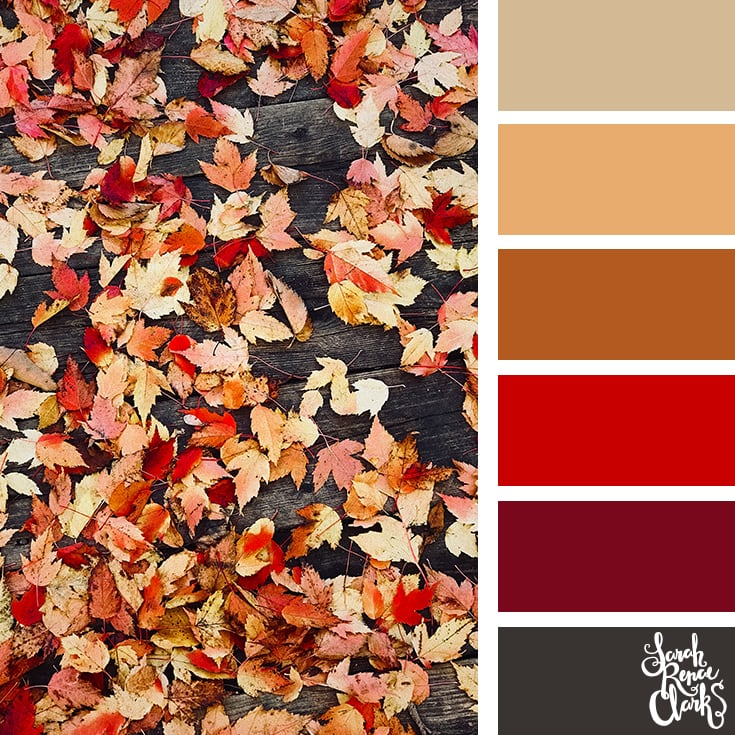 Color Palette - red, brown, black