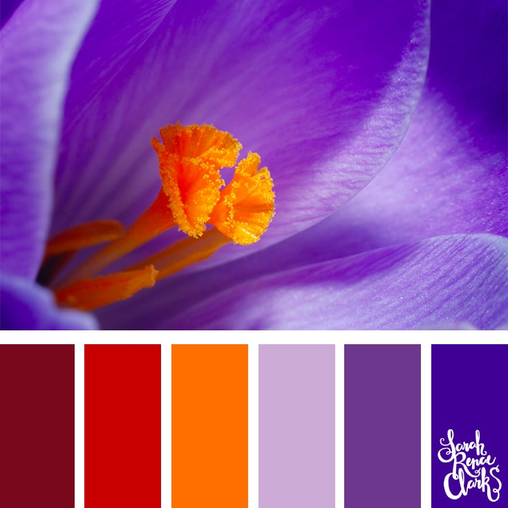 Color Palette - red, orange, lilac, purple
