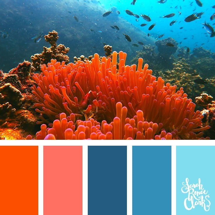 Coral color scheme - color palettes, color schemes
