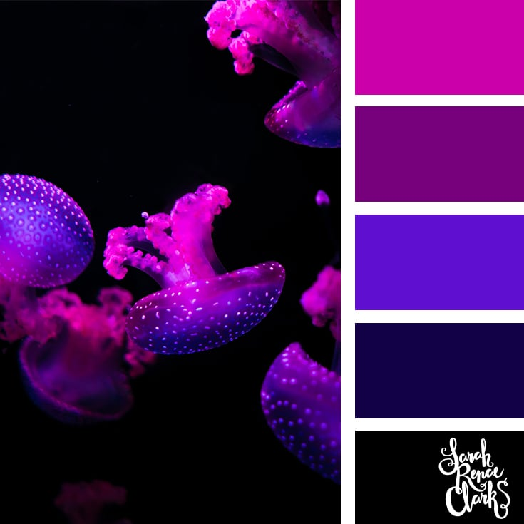 Purple jellyfish color scheme - color palettes, color schemes