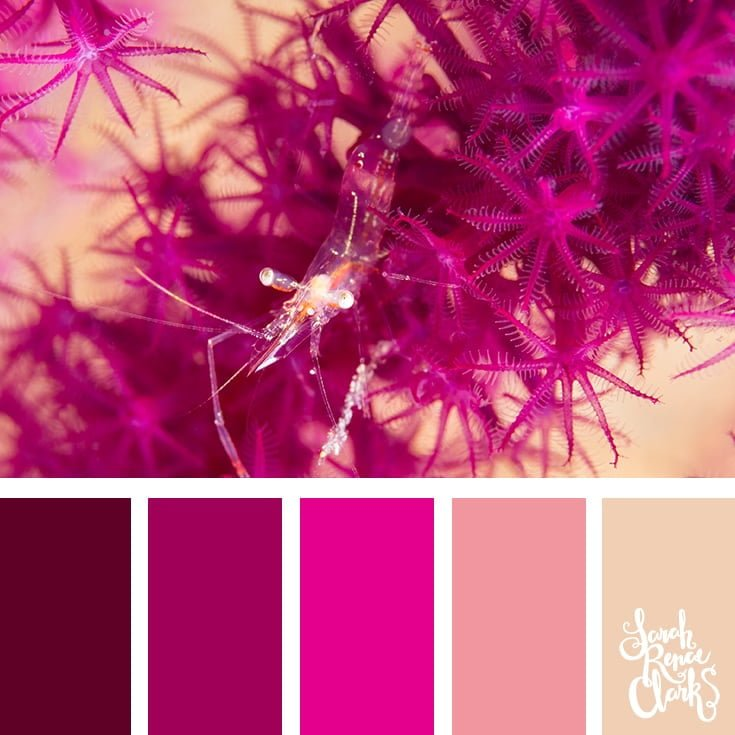 Starfish cluster - pink color palette - color palettes, color schemes