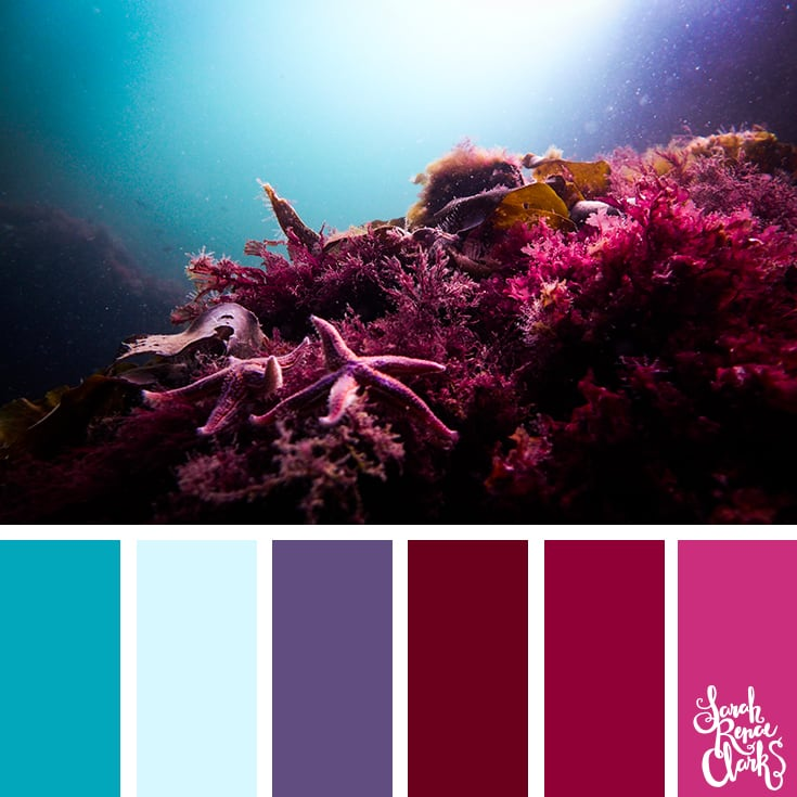 Living coral color inspiration - color palettes, color schemes