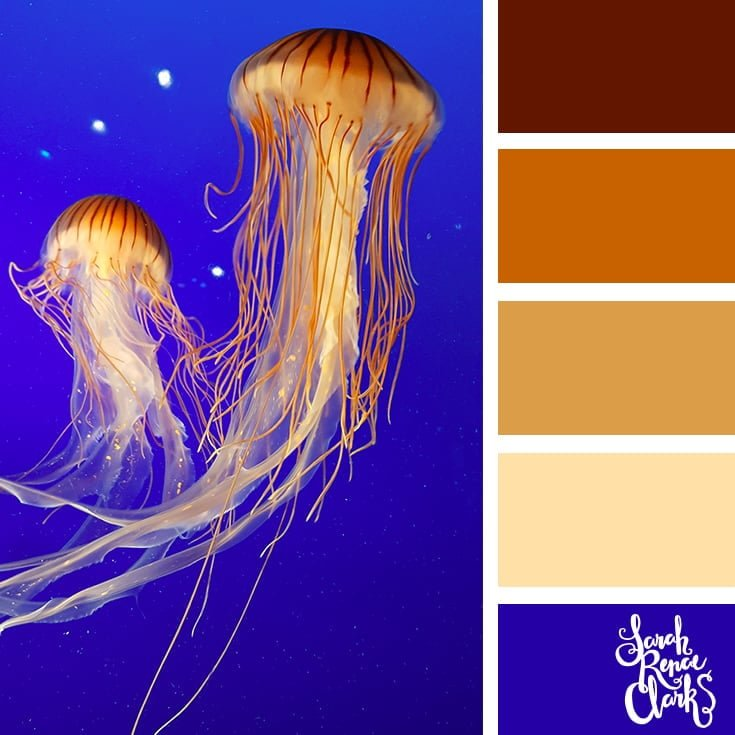 Jellyfish colors - color palettes, color schemes