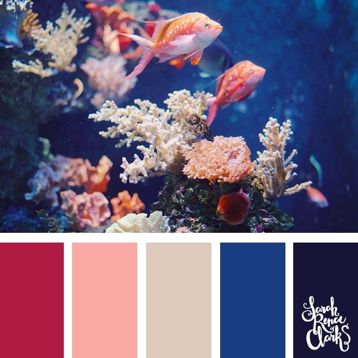 Fish color inspiration - color palettes, color schemes