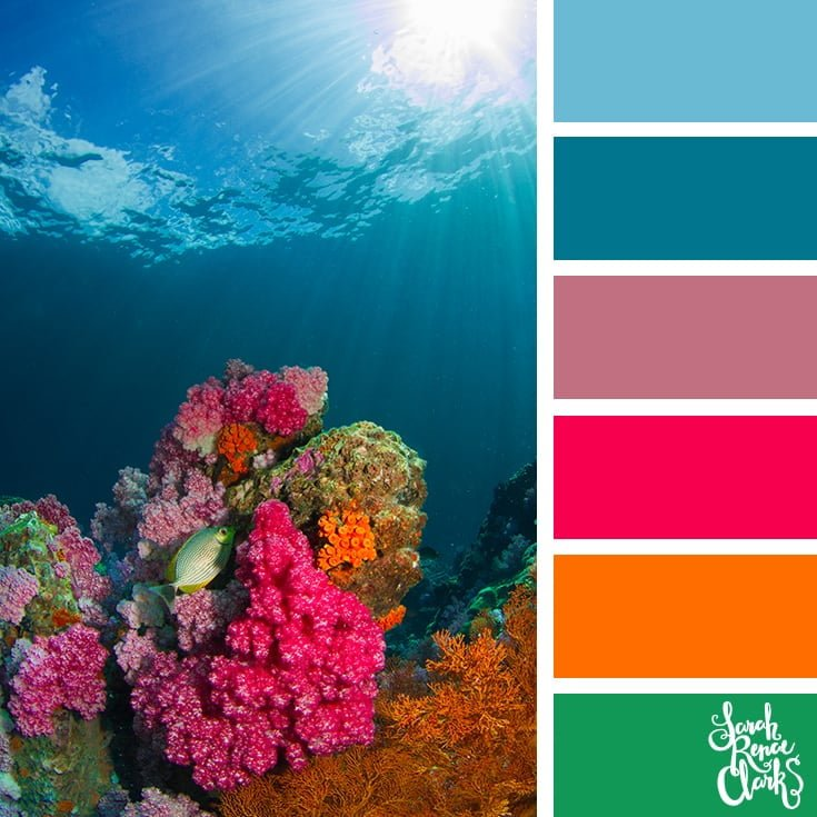 Beautiful coral colors - color palettes, color schemes