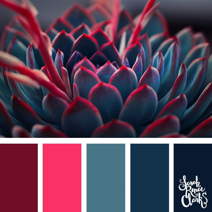 Succulent colors
