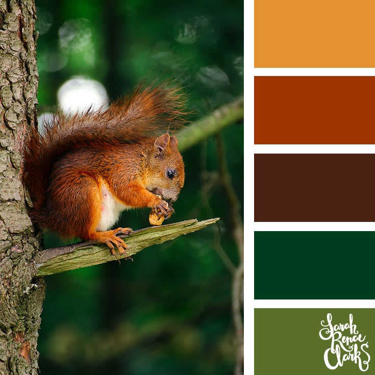 Woodland color inspo